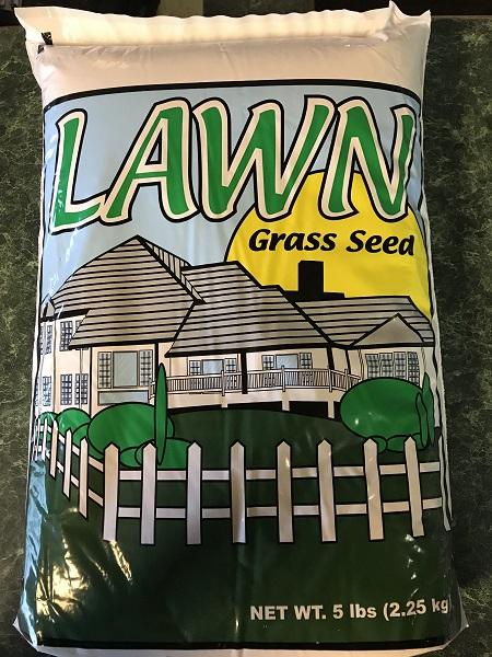 Bluegrass Seed