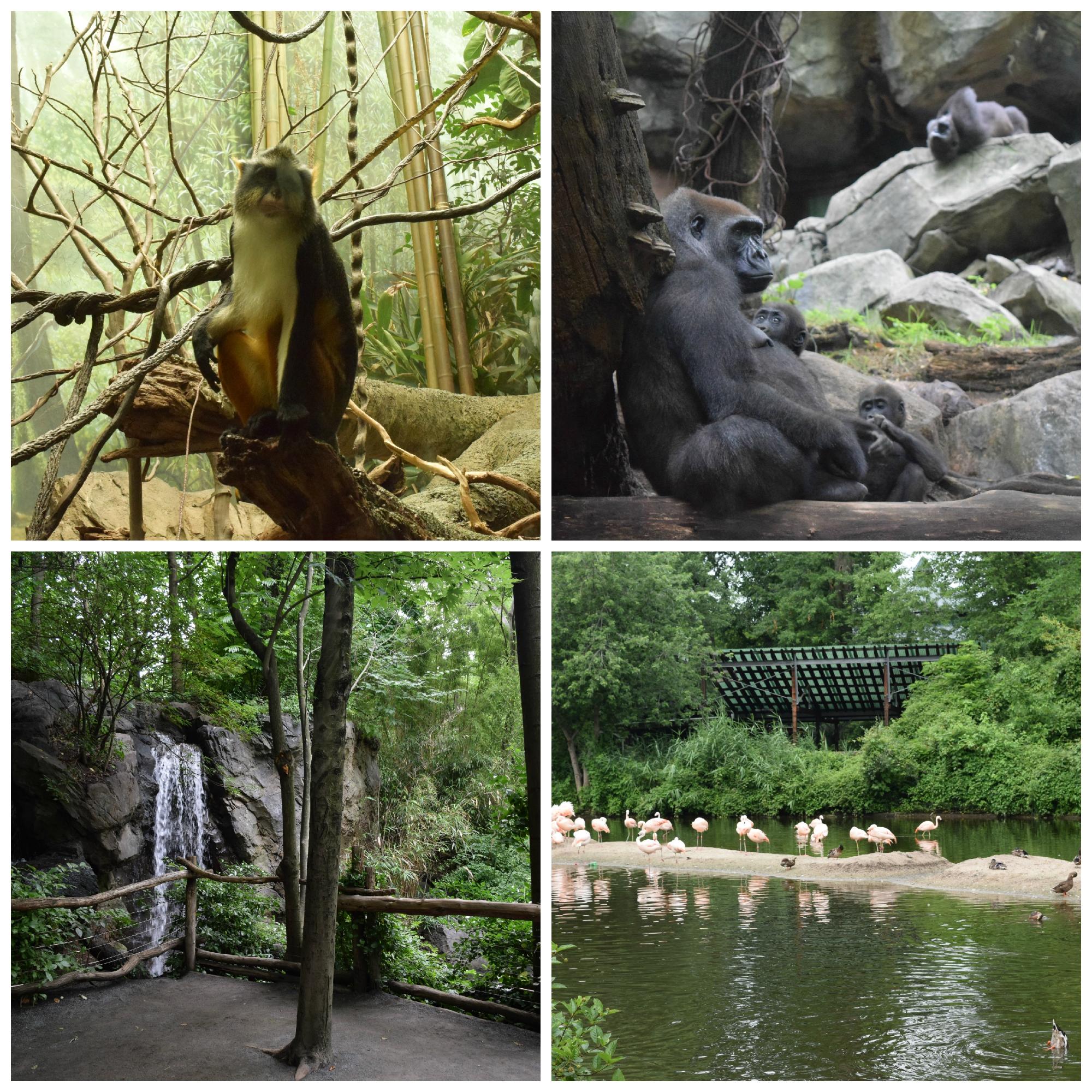 Bronx Zoo