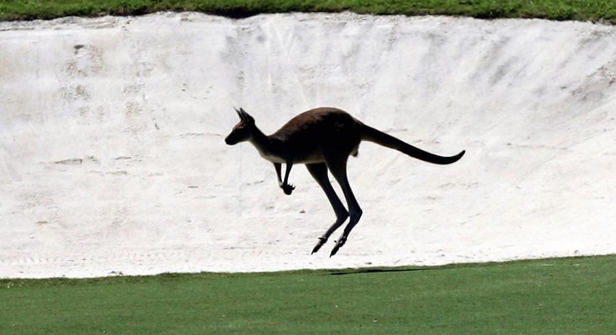 Kangaroo at sand-trap Johnny Walker 2006 - Photo: David Cannon/Getty Images