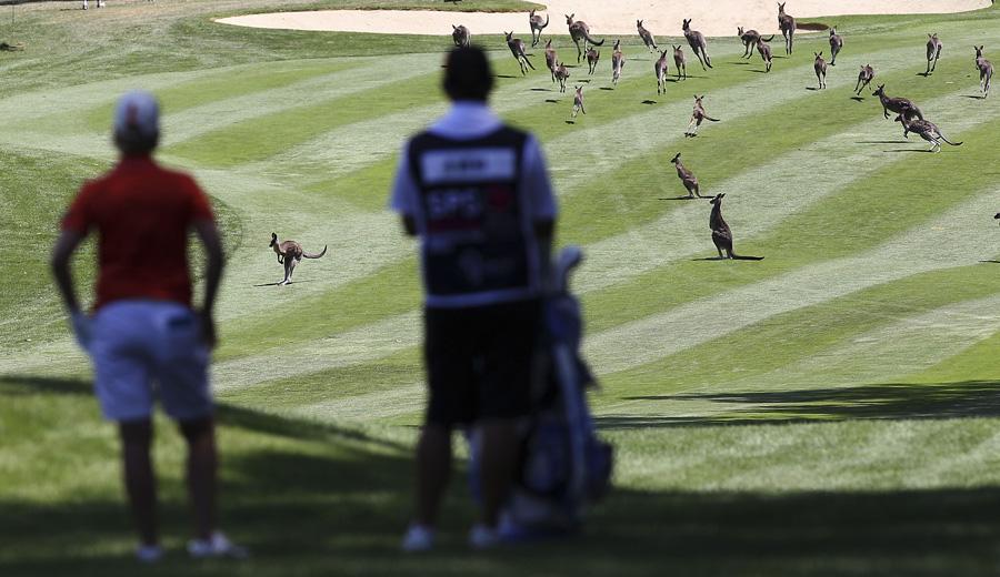 Australian Open takeover - Photo: Stefan Postles/Getty Images