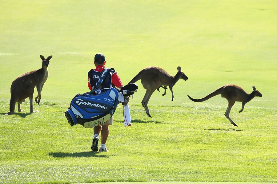 Kangaroos crossing course - Photo: Paul Kane/Getty Images