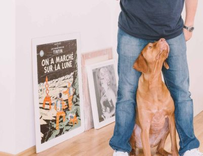 3 Ways To Teach Your Dog Understadn Art