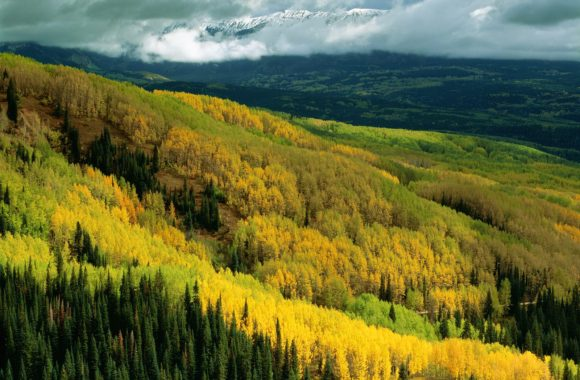 aspen-forest-early-fall-ohio-pass-gunnison-national-forest-colorado