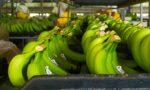 Brazilian banana Packaging Facility