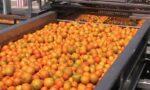Orange juice exports