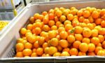 Orange juice exports - orange juice production