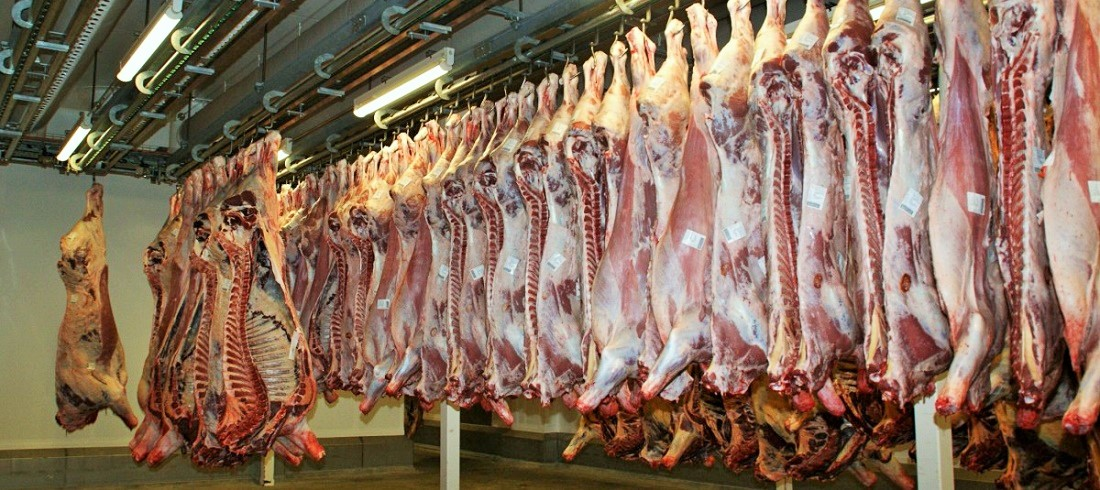 meat slaughterhouse - Brazil's cattle slaughter has increased