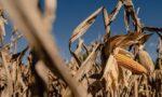 corn exports - exportação de milho