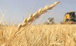 exportações de trigo (wheat exports Argentina)