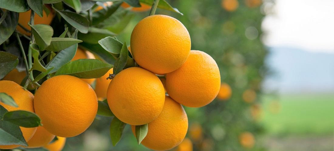 exportações de suco de laranja