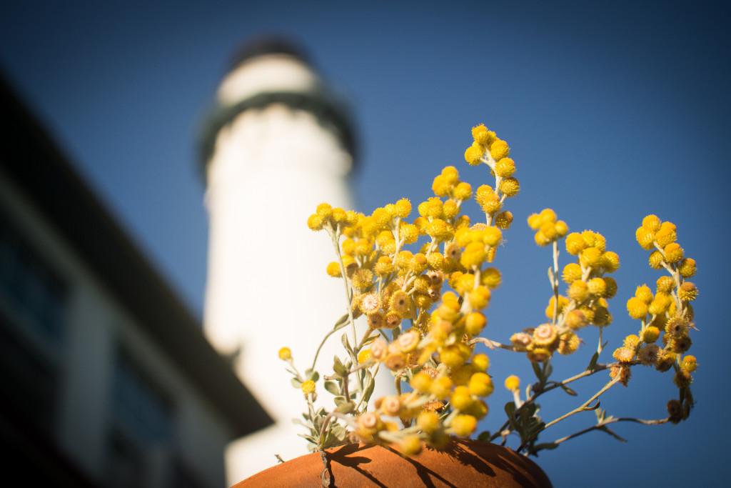 Tower_yellow-flowers-1024x683