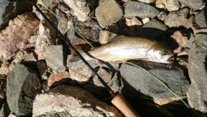 1st-fish-6wt_640