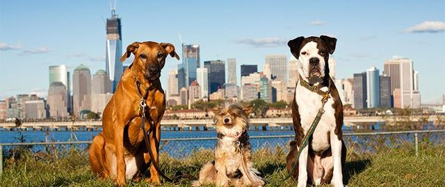 Dog-Friendly Places in New York City