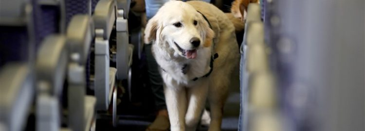 Flying with Your Pets
