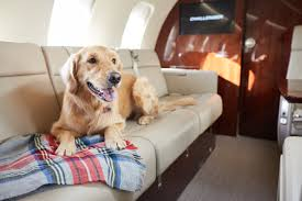 Pet Air Travel