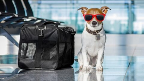Pet Escort Travel Services