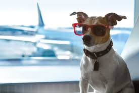 Pet Escort Travel Service