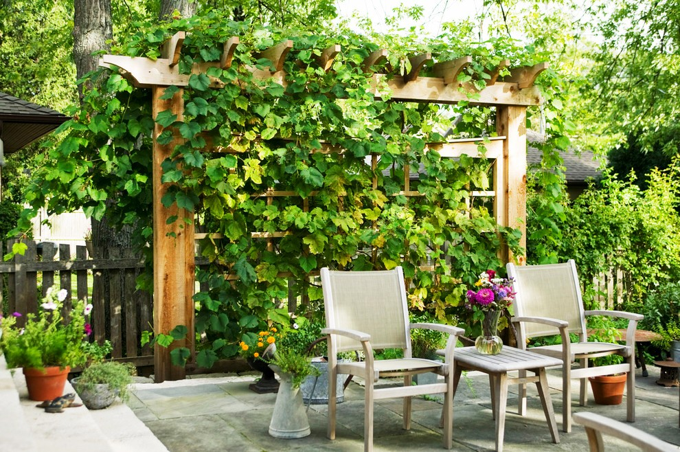 grape-trellis-design-Patio-Traditional-with-mass-planting-outdoor-furniture
