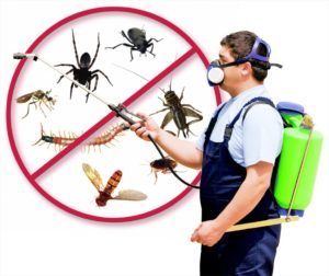 Why Shouldn't You Do Your Own Pest Control?