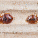 Useful Tips to Get Rid of Bed Bugs