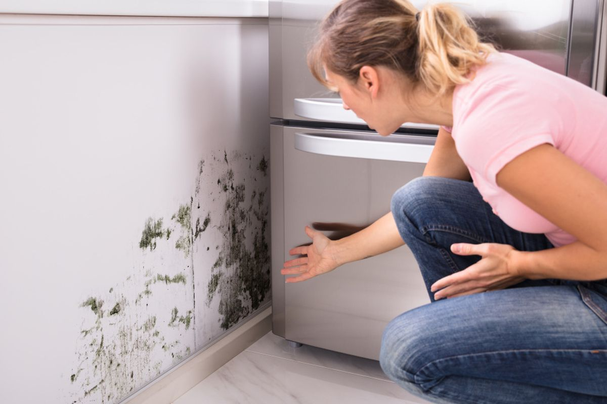 If You See Mold in Your Home, Don't Panic Right Away