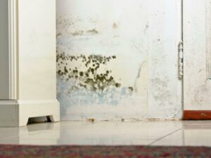 How to Get Rid of Black Mold