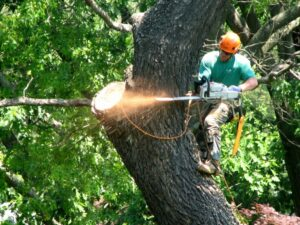 Why You Need a Local Tree Service