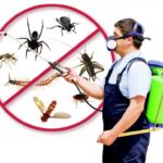 5 Reasons Why You Need Regular Pest Control Service