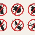 6 Useful Tips to Protect Your Home from Bugs