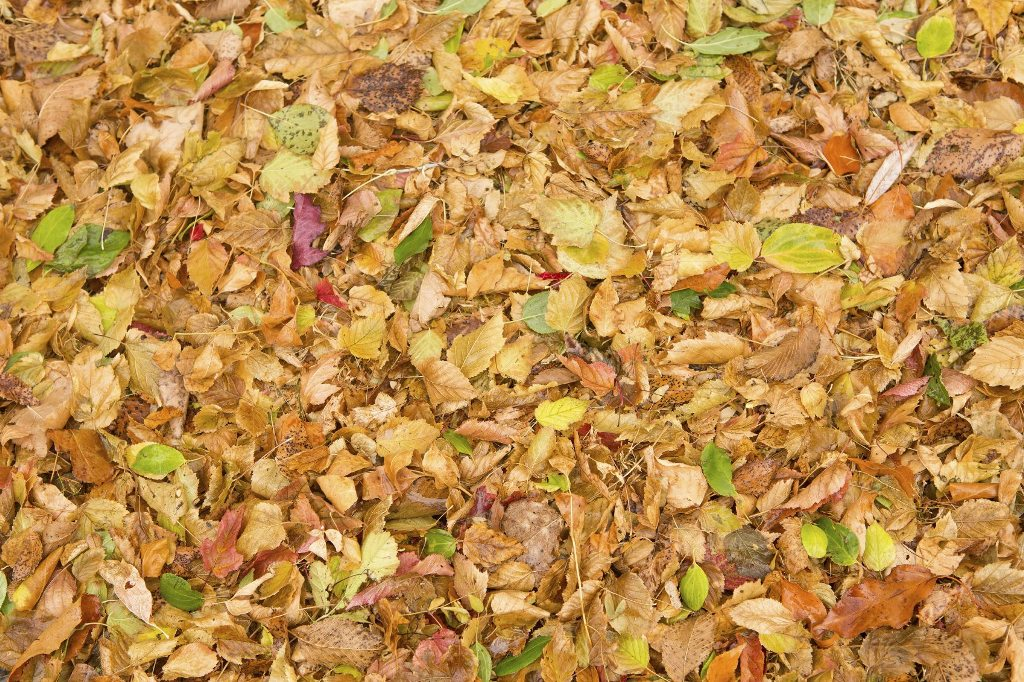 Use Leaves to Make Mulch
