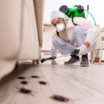 Household Pest Control: The Top Tips for Controlling and Preventing Pests