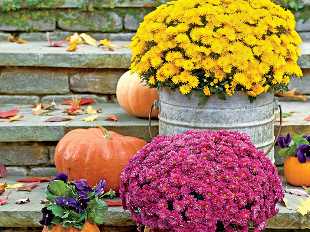 Your Guide to Fall Planting