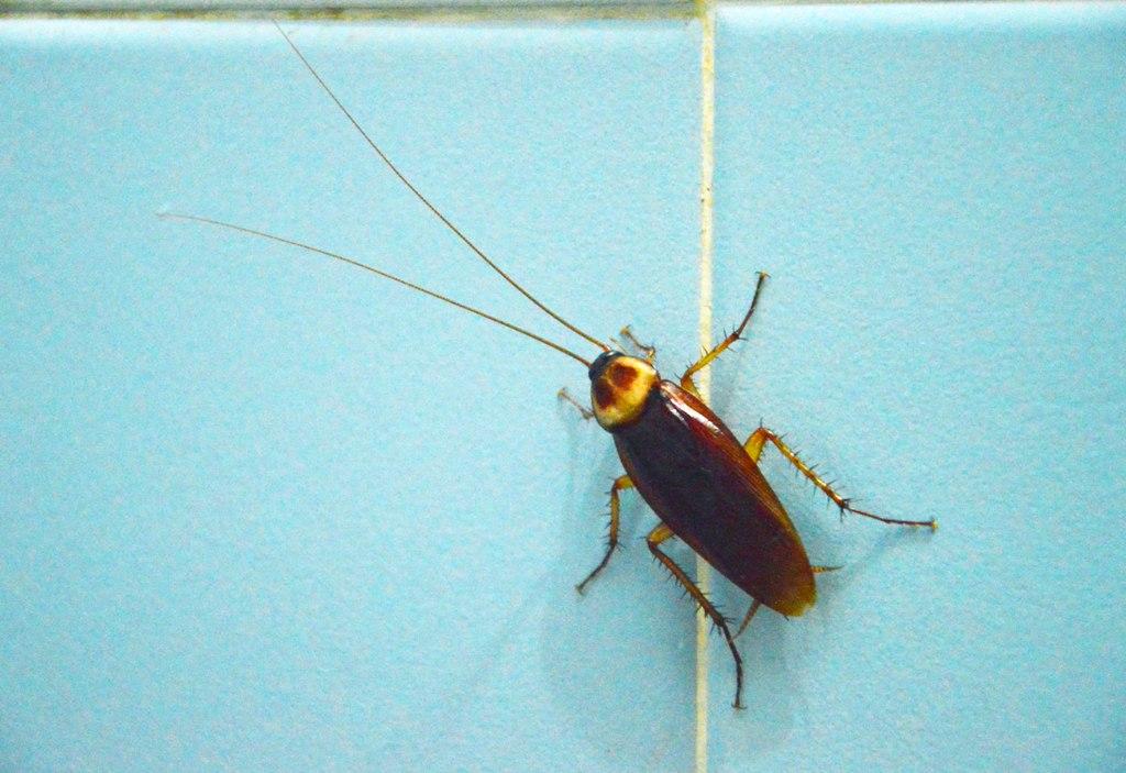 Common Kitchen Bugs