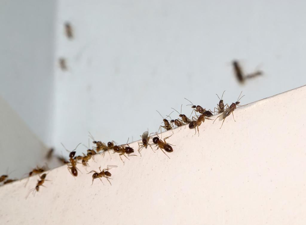 Cover up holes and leaks The basics of pest control