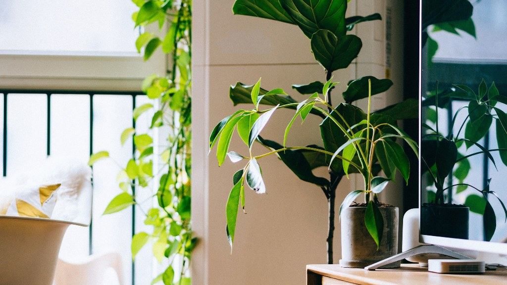 Making Your Home Eco Friendly