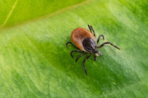 Local Tick Control: Ways to Manage and Reduce the Local Tick Population