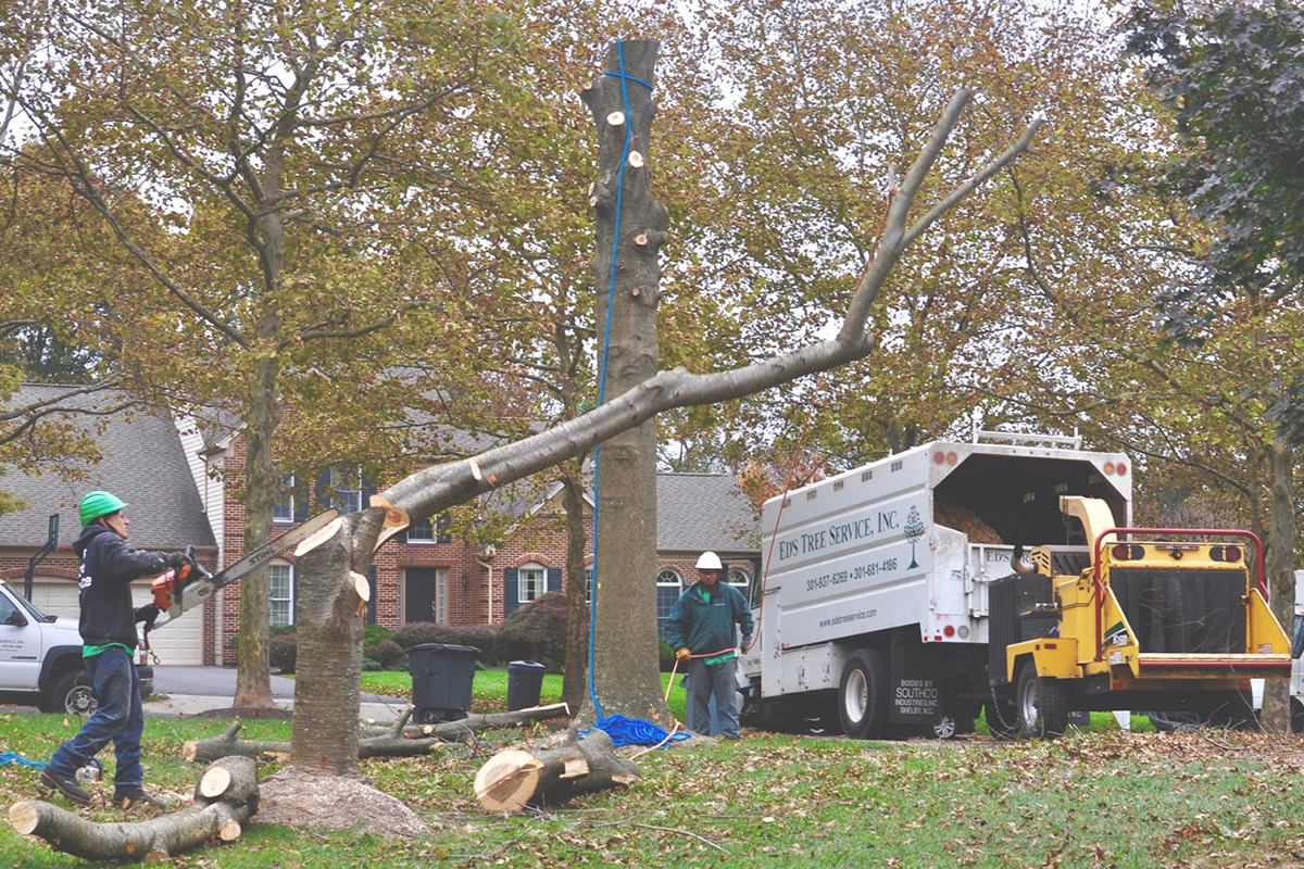 What to Look for While Hiring a Tree Service Company · Wow Decor