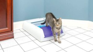 Automtic Litter Boxes: Facts You Should Know