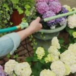 How to Use Watering Wands to Keep Your Lawn Lush and Green