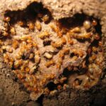 Frequently Asked Questions About Termite Control