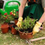 Save the Planet: Switch to Natural Lawn Care