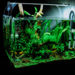6 Excellent Tips That Will Improve Your Aquarium Maintenance Skills