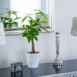 Caring for Your Money Tree