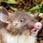 Hear Something in Your Attic? It May be a Rodent Problem