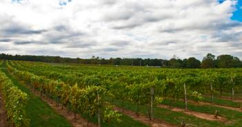 nj vineyards