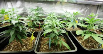 NJ Medical Marijuana