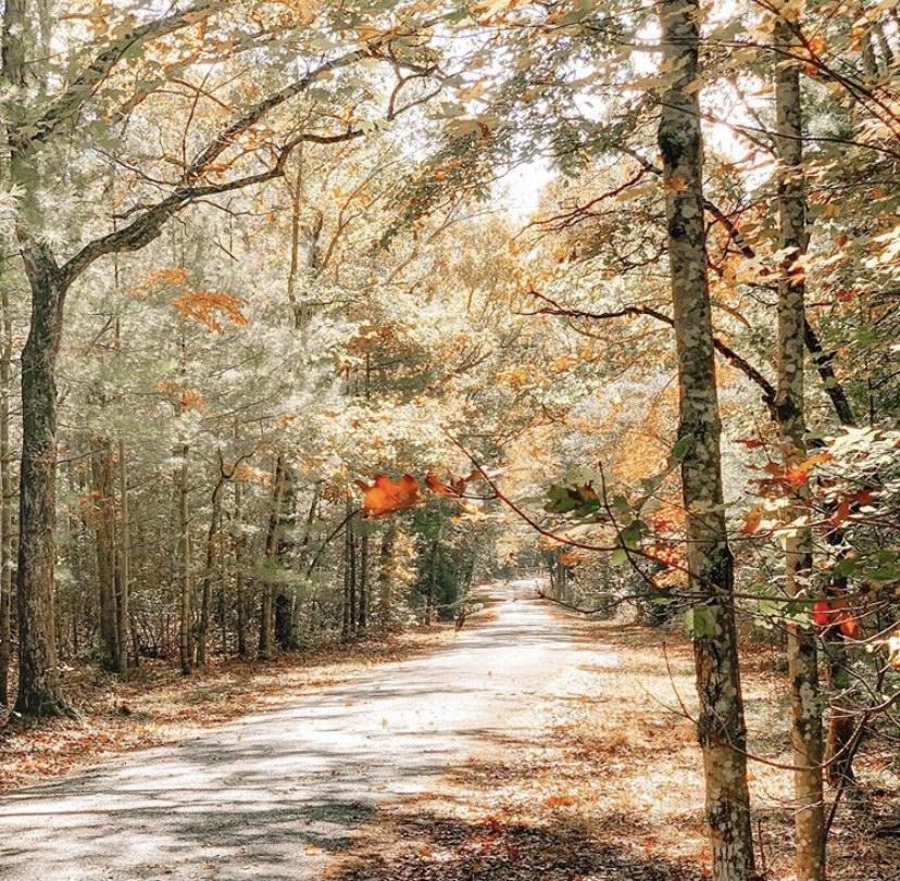 bike trails in nj belleplain state forest nj mom