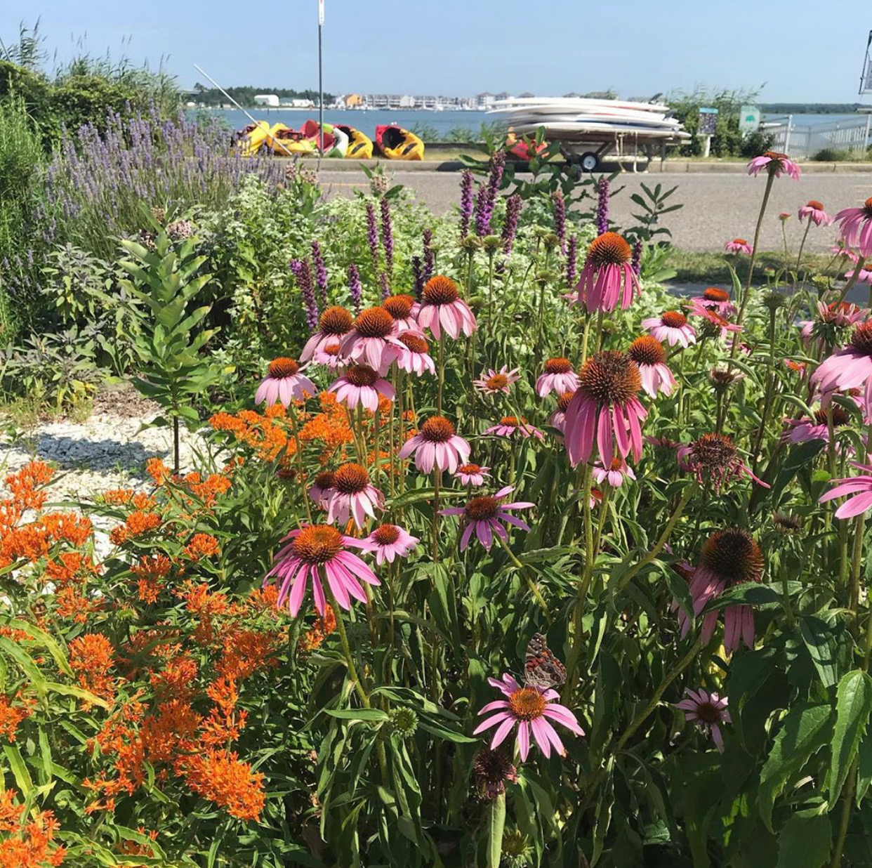 nj mom best gardens and nature centers new jersey nj audobon nature center of cape may