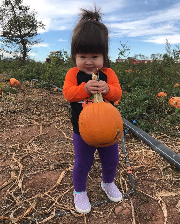 nj mom best pumpkin picking in nj pumpkin patch nj pumpkin farm new jersey