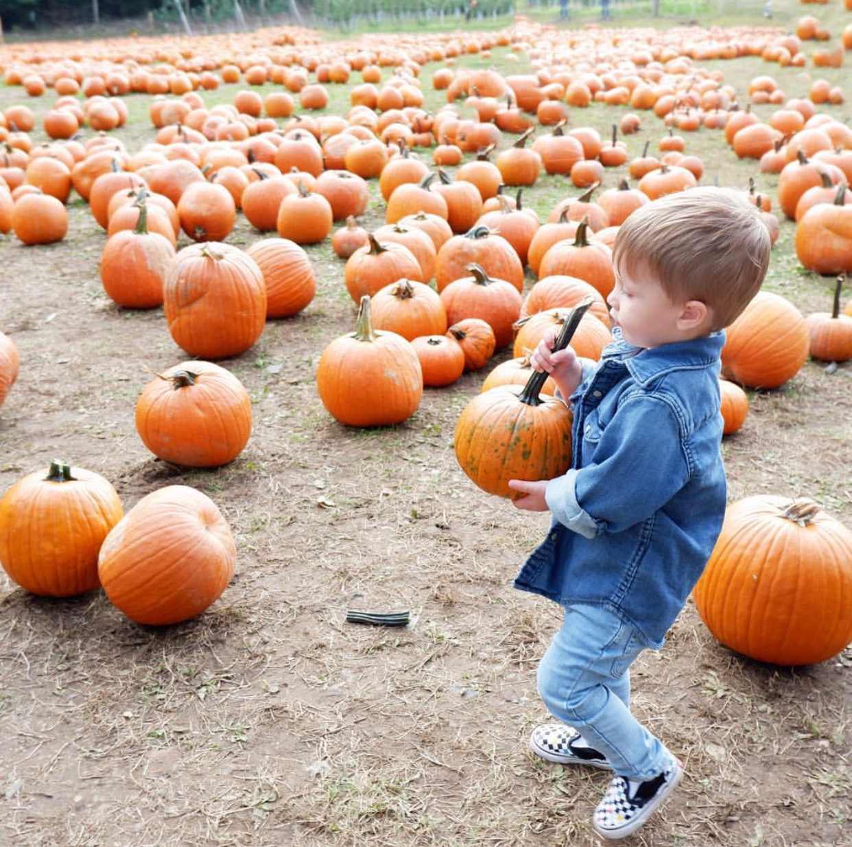 Things to do in NJ Fall in NJ things to do in New Jersey fall activities in NJ pumpkin picking in nj